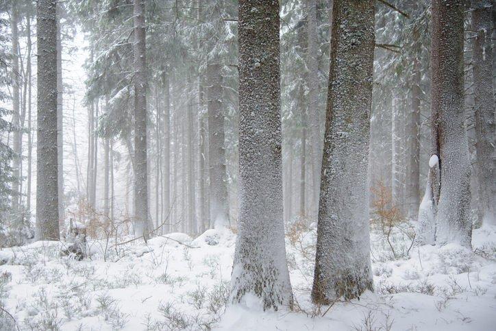 17-12-29 Bäume.jpg
