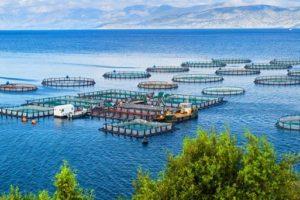 Aquakultur