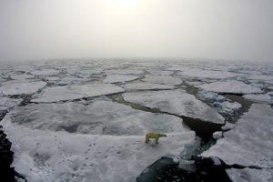 Eisbär auf Eisschollen