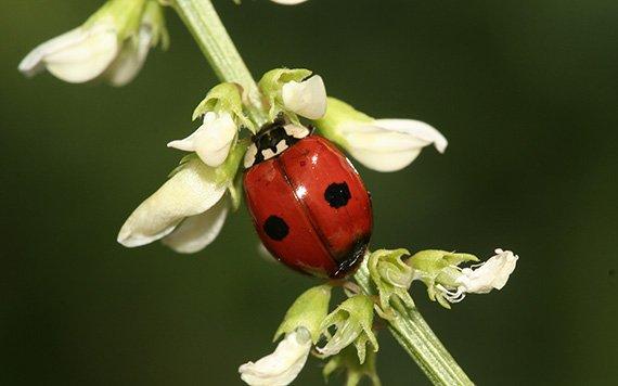 biomasse fliegender insekten ist in deutschland um 76