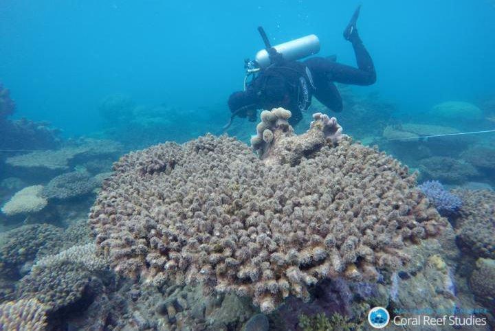 18-01-04 Korallen.jpg