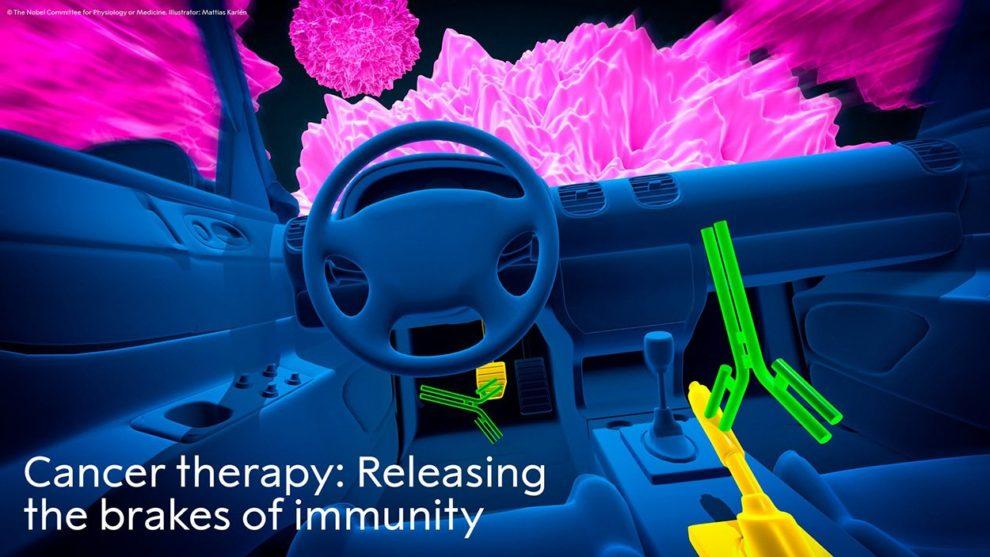 Immuntherapie