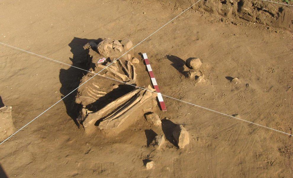 Skelett aus Chile