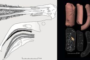 Pterosaurier - FLamingo