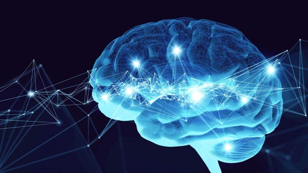 Gehirn