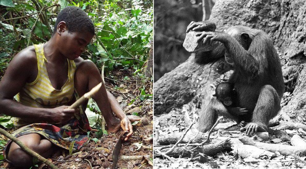 Frau und Schimpansin