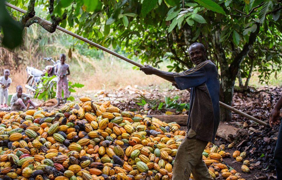 Kakao-Landarbeiter