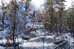 Wald nach Brand