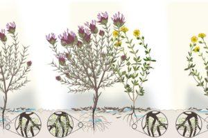 Pflanzeninteraktion