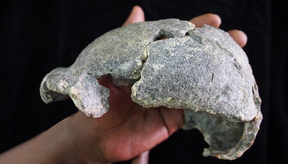 Homo erectus Schädel