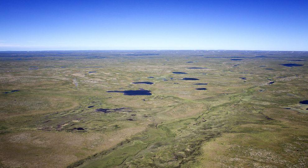 Arktische Tundra