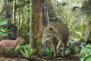 Urpferde und Tapir