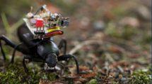Käfer mit Kamera