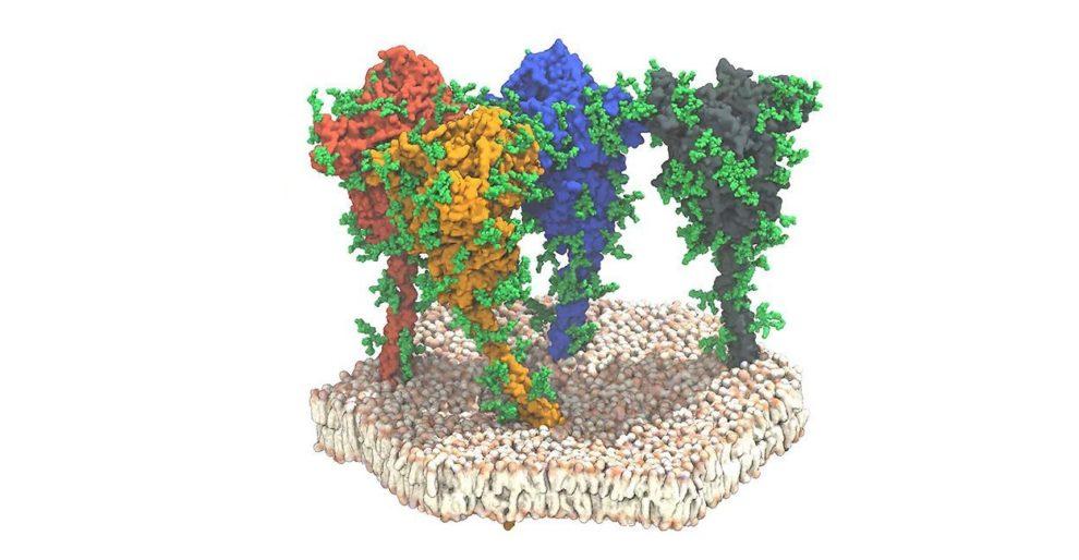 Spike-Proteine
