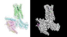 Serotonin-Rezeptor