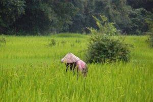 20180119_IPBES-SCIENCE__Rice-Laos_byRolandKraemer_P1140225x.jpg