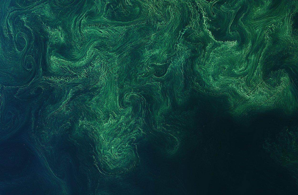 Algenblüte in der Ostsee (Landsat-Aufnahme)