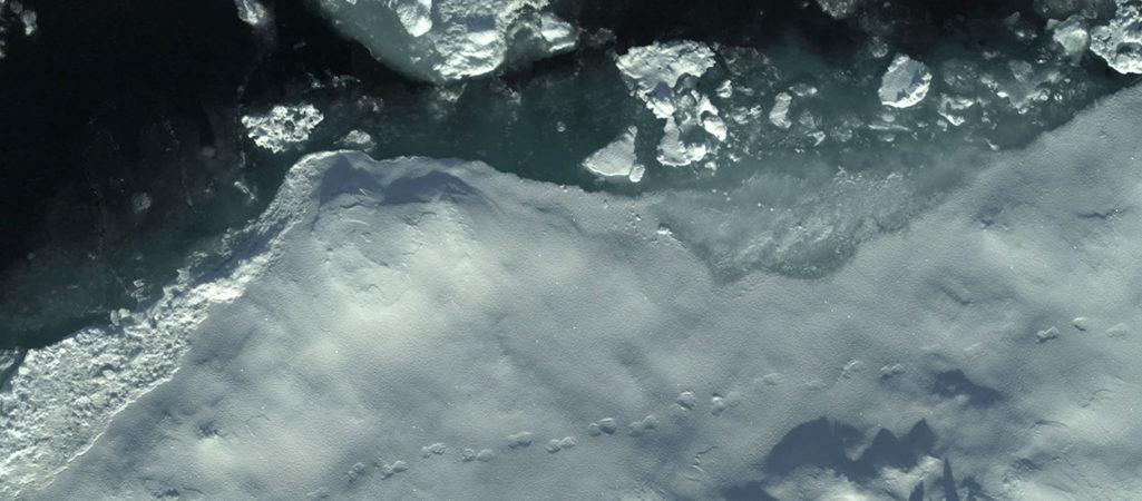 Eisbärspuren auf Eisscholle