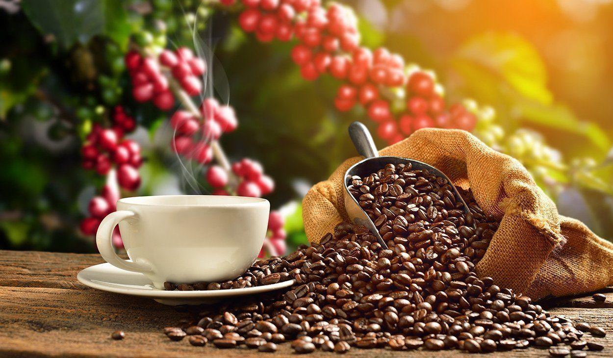 Vergessene-Kaffeeart-k-nnte-dem-Klimawandel-trotzen
