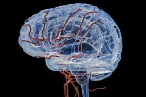 Adern des Gehirns
