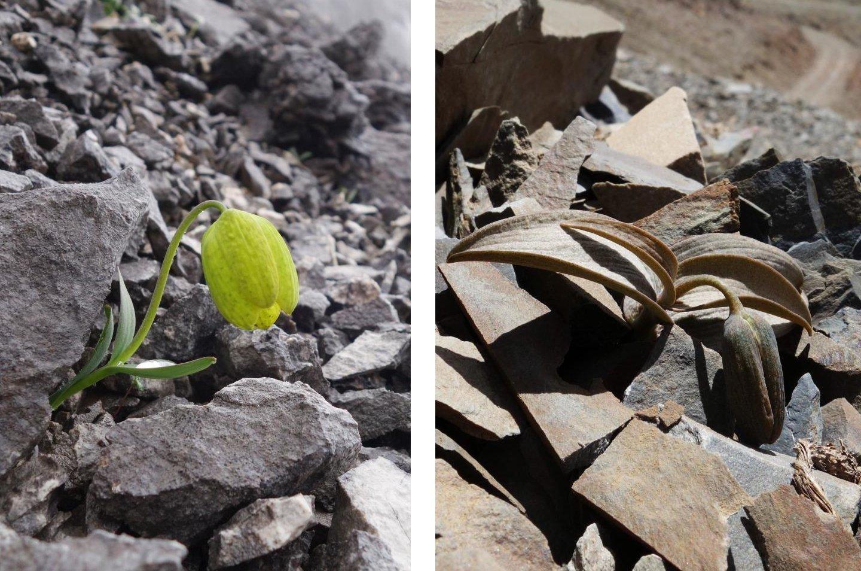 Pflanze-versteckt-sich-vor-Menschen