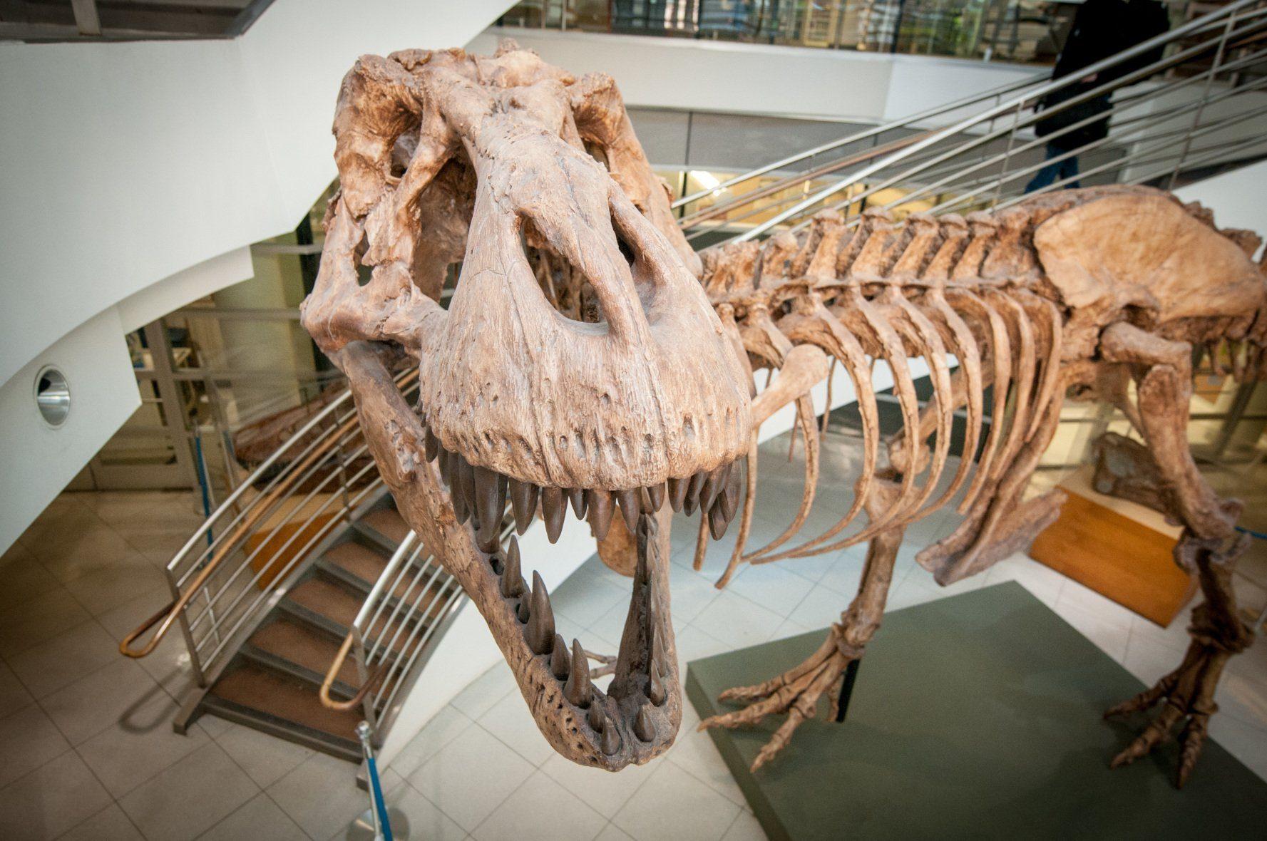 T-rex-Wie-viele-haben-jemals-existiert-