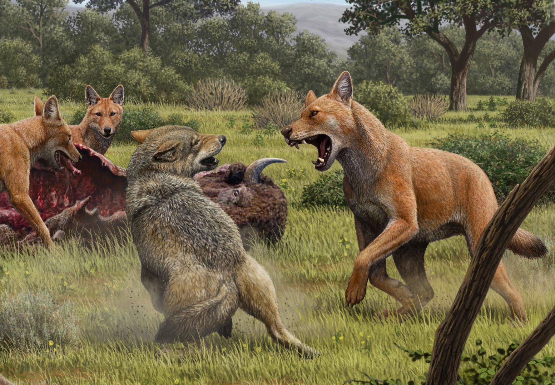 Dem-r-tselhaften-Schattenwolf-auf-der-Spur