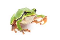Frosch_kl2.jpg