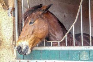 Pferd_.jpg