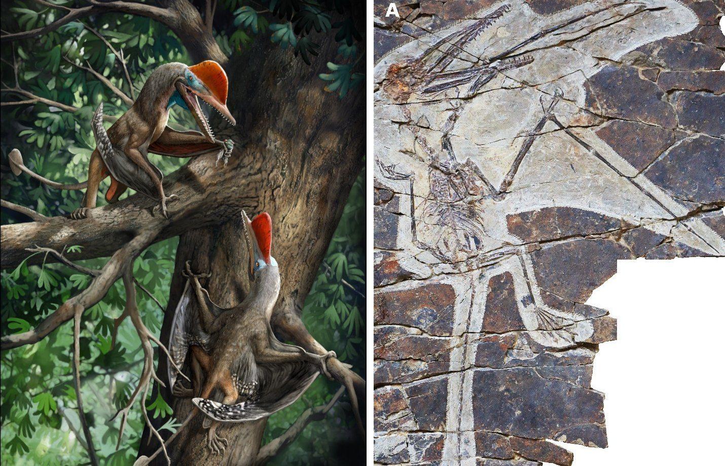 Flugsaurier-mit-menschlichen-Daumen