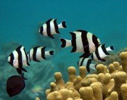 Können Fische Riechen