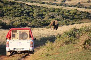 Speaker_Elephant_.jpg