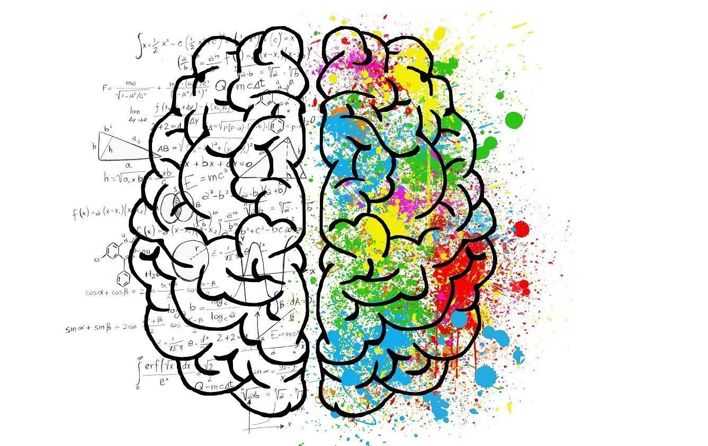 Gehirn Foto