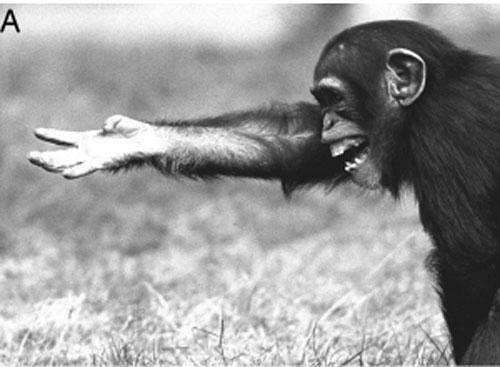 Affen Zeichensprache