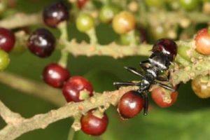 ant_plant_1.jpg
