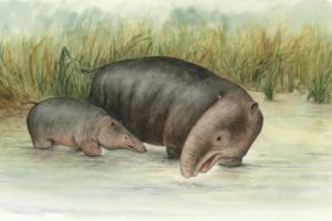 bearbeitet_moeritherium_seeelefant_by_luci_betti_nash.jpg