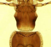 beetlecover.jpg
