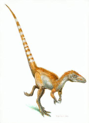 bild_1_sinosauropteryx_jim_robins_2.jpg