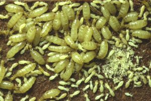 bild_1_termitenkolonie.jpg