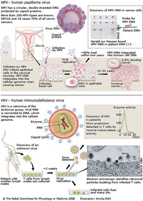 hpv virus retrovirus
