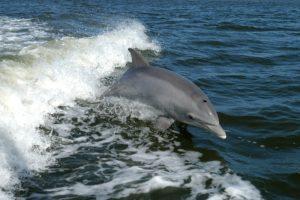 bottlenose_dolphin_ksc04pd0178.jpg