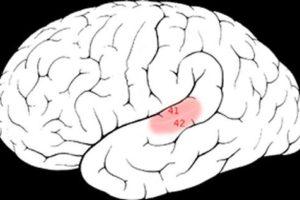 cortex.jpg