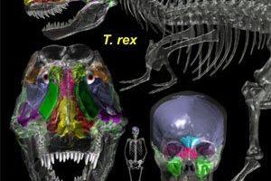 dinosaur_air_heads.jpg