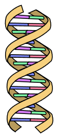 dna_simple.png