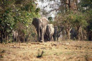 elefant101.jpg