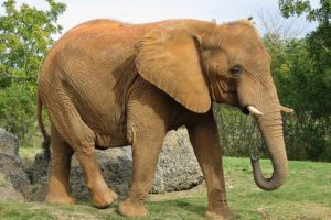 elefant_onl.jpg