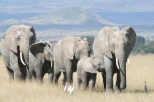 elefanten1_onl.jpg