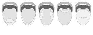 Lage der Geschmacksrezeptoren auf der Zunge