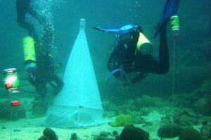 korallen02.jpg