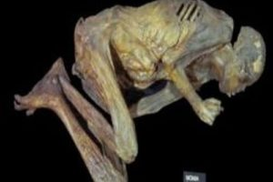 mumie02.jpg